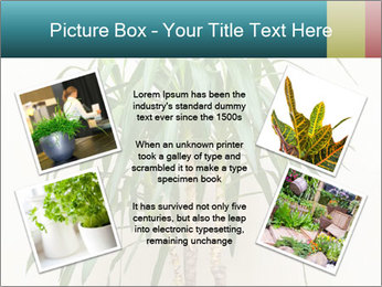 Green houseplant PowerPoint Template - Slide 24
