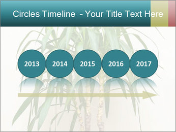 Green houseplant PowerPoint Templates - Slide 29