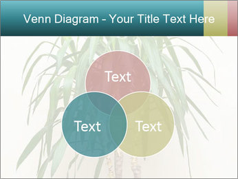 Green houseplant PowerPoint Template - Slide 33