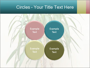 Green houseplant PowerPoint Template - Slide 38