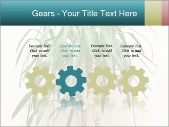 Green houseplant PowerPoint Template - Slide 48