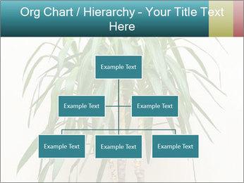 Green houseplant PowerPoint Templates - Slide 66