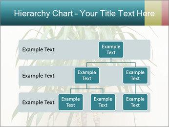 Green houseplant PowerPoint Templates - Slide 67
