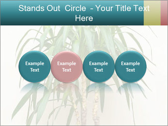 Green houseplant PowerPoint Template - Slide 76