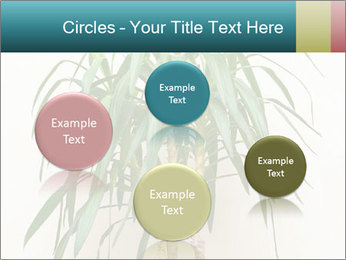 Green houseplant PowerPoint Template - Slide 77