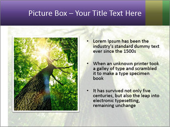Forest trees PowerPoint Template - Slide 13