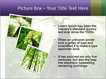 Forest trees PowerPoint Template - Slide 17