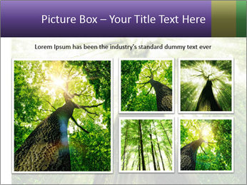Forest trees PowerPoint Template - Slide 19