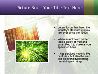 Forest trees PowerPoint Template - Slide 20