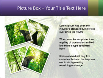 Forest trees PowerPoint Template - Slide 23