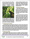 0000092981 Word Template - Page 4