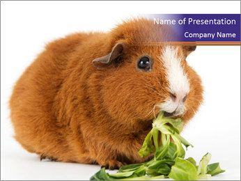 Brown guinea pig PowerPoint Template - Slide 1