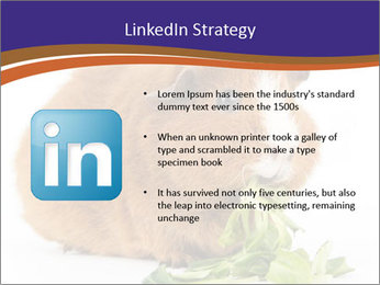 Brown guinea pig PowerPoint Template - Slide 12