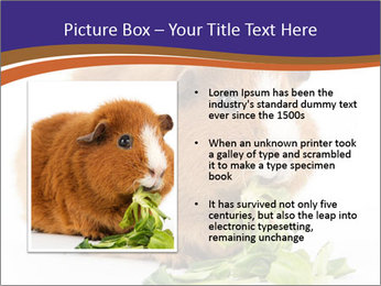 Brown guinea pig PowerPoint Template - Slide 13