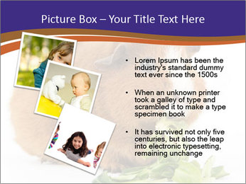 Brown guinea pig PowerPoint Template - Slide 17