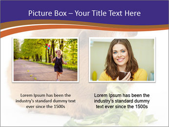 Brown guinea pig PowerPoint Template - Slide 18