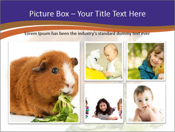 Brown guinea pig PowerPoint Template - Slide 19