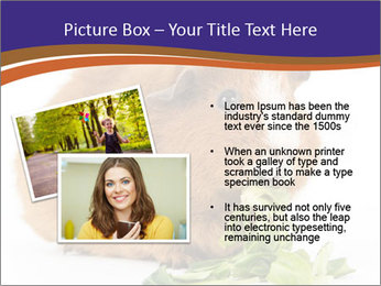 Brown guinea pig PowerPoint Template - Slide 20