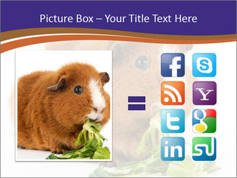 Brown guinea pig PowerPoint Template - Slide 21