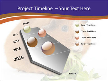 Brown guinea pig PowerPoint Template - Slide 26