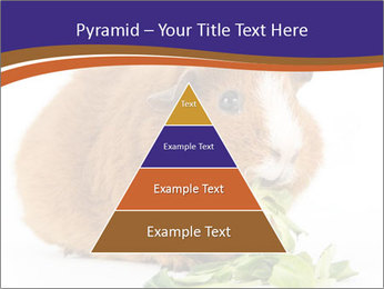Brown guinea pig PowerPoint Template - Slide 30