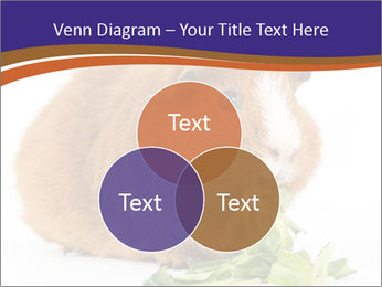 Brown guinea pig PowerPoint Template - Slide 33