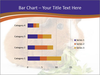 Brown guinea pig PowerPoint Template - Slide 52