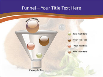 Brown guinea pig PowerPoint Template - Slide 63