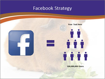 Brown guinea pig PowerPoint Template - Slide 7