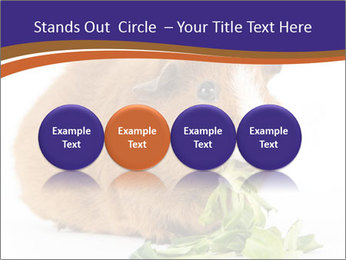 Brown guinea pig PowerPoint Template - Slide 76