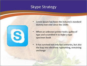 Brown guinea pig PowerPoint Template - Slide 8