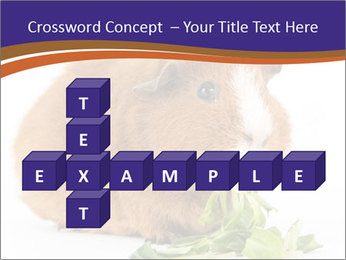 Brown guinea pig PowerPoint Template - Slide 82