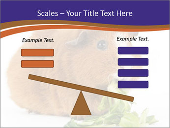 Brown guinea pig PowerPoint Template - Slide 89