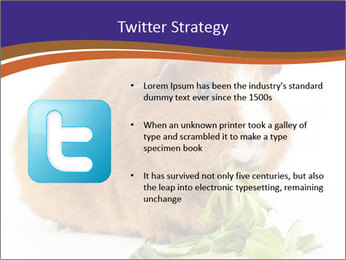 Brown guinea pig PowerPoint Template - Slide 9