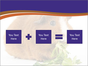 Brown guinea pig PowerPoint Template - Slide 95