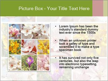 Beautiful flowers PowerPoint Template - Slide 13