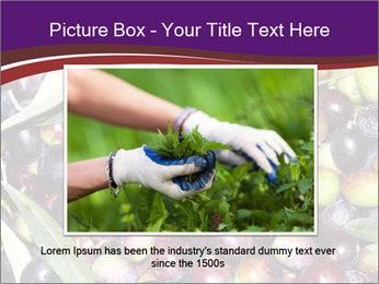 Freshly harvested PowerPoint Templates - Slide 15
