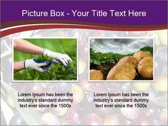 Freshly harvested PowerPoint Templates - Slide 18