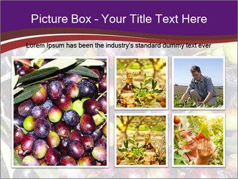 Freshly harvested PowerPoint Templates - Slide 19