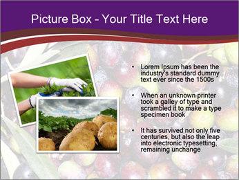 Freshly harvested PowerPoint Templates - Slide 20