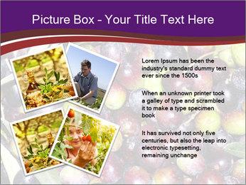 Freshly harvested PowerPoint Templates - Slide 23