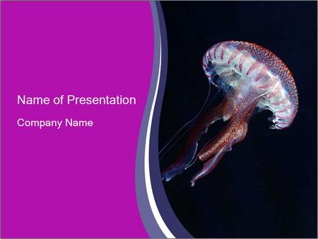 Mauve stinger PowerPoint Templates