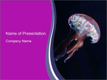 Mauve stinger PowerPoint Template