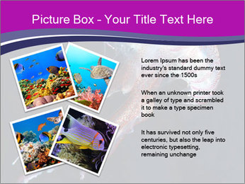 Mauve stinger PowerPoint Template - Slide 23