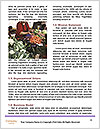 0000093022 Word Templates - Page 4