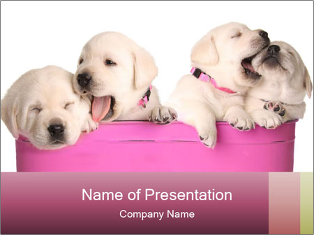 Labrador retriever puppies PowerPoint Templates