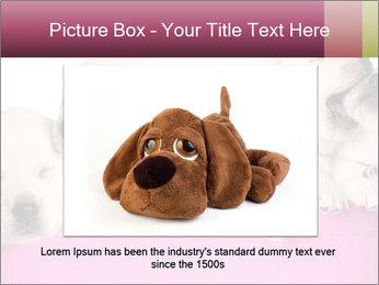 Labrador retriever puppies PowerPoint Templates - Slide 15
