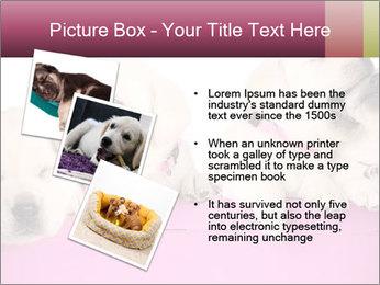 Labrador retriever puppies PowerPoint Templates - Slide 17