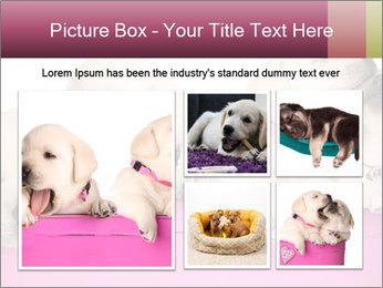 Labrador retriever puppies PowerPoint Templates - Slide 19