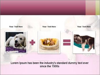 Labrador retriever puppies PowerPoint Templates - Slide 22